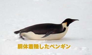 pen_doutai_m