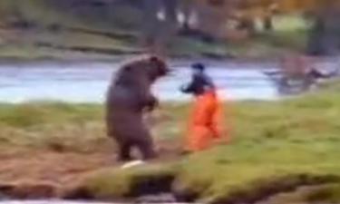 bear65