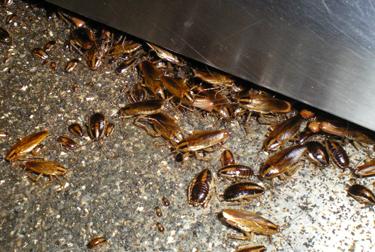 ゴキブリの画像 p1_7